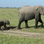 Copy (1) of kenia-2009-02 161
