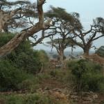 kenia-2009-01 1106