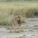 kenia-2009-01 1231