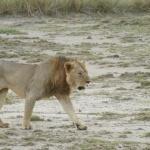 kenia-2009-01 1240