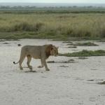 kenia-2009-01 1252