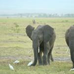 kenia-2009-01 1489