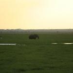kenia-2009-01 1539