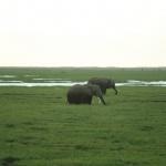 kenia-2009-01 1541