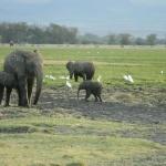 kenia-2009-01 1557