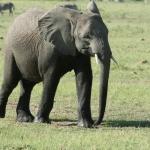 kenia-2009-02 186