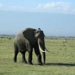 kenia-2009-02 194