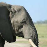 kenia-2009-02 197