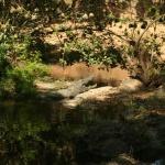 kenia-2009-03 170